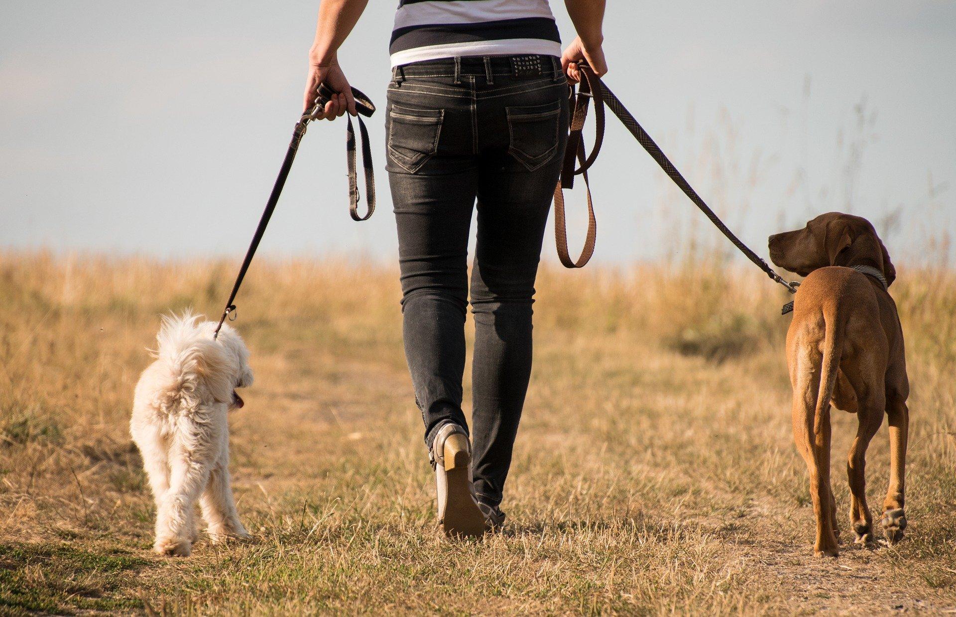 Chiens et affaires vétérinaires